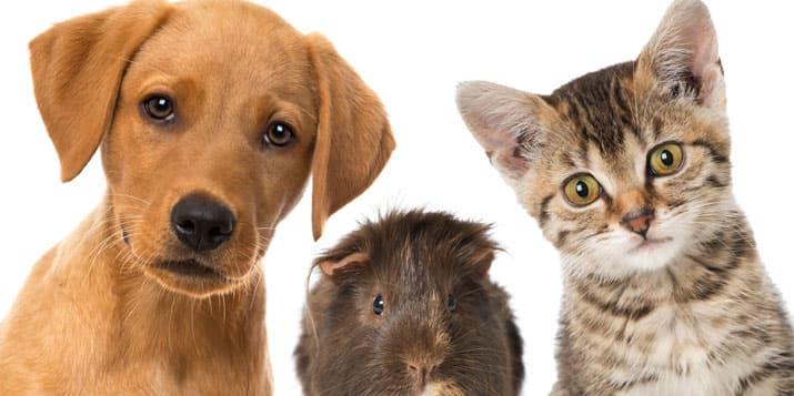 Mascotas para cada signo zodiacal